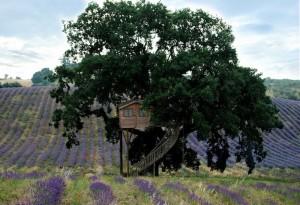 hotel sull'albero viterbo