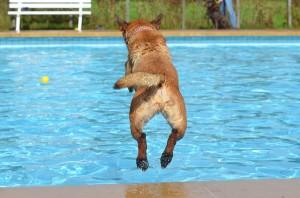 Aquapark per cani