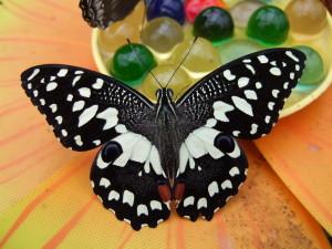 casa delle farfalle bordano