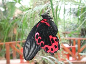 casa delle farfalle micromegamondo