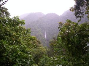 Tapanti costarica