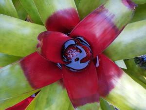 pianta costarica