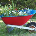 Tutti i fiori utili annuali da seminare nell'orto