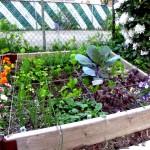 La lotta biologica nell'orto di maggio