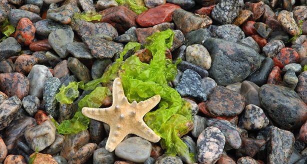 Alghe e ecologia