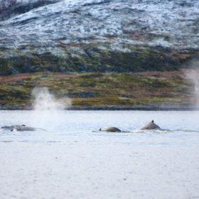 Gli incendi nel circolo polare artico potrebbero aver continuato a bruciare sotto la copertura invernale e non essere notate