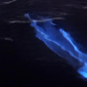 Inostri mari sono ricchi di sorprese e colori, come le onde luminescenti che crea l'alga dinoflagellante