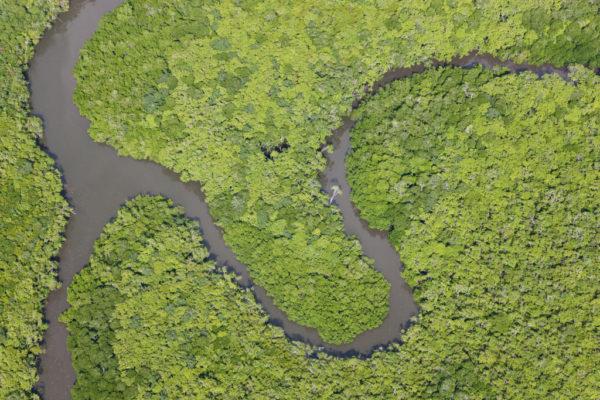 Un mix distruttivo di deforestazione e cambiamenti climatici sta portando le foreste in tutto il mondo ad essere più giovani e con alberi molto più corti.